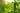 Naturaufnahme einer Gurkenpflanze mit Gurke und durchscheinendem Sonnenlicht in Nahaufnahme