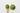 Holzlöffel mit grünem Matchapulver auf hellgrauem Hintergrund
