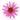 Große pinke Echinaceabluete in Nahaufnahme auf weißem Hintergrund