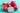 Eine aufgeschnittene und mehrere ganze pinke Drachenfruechte auf tuerkis lackiertem Holzuntergrund