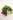 Dunkle und gruene Weintrauben mit Blaettern auf weißem Holztisch