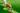 Zweig mit einzelnen roten Gojibeeren und grünen Blättern