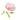 Rosa farbene Wildrosenbluete und hellgruene zarte Blaetter vor weißem Hintergrund