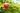 Reifer Granatapfel hängt an einem Ast im Hintergrund weitere grüne Planzen