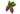 Nahaufnahme zweier Kakaofruechte mit gruenen Blaettern auf weißem Hintergrund