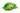 Grüne Kaffeebohnen liegen auf einem grünen Blatt mit weißem Hintergrund