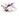 Nahaufnahme einer weiß lila farbenen Karanjablüte auf weißem Hintergrund