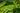 Naturaufnahme von Teeplantage mit leuchtend gruenen Zweigen im Vordergrund in Nahaufnahme