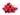 Rote Trauben mit Wassertropfen auf weißem Untergrund